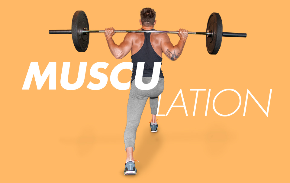 SP musculation